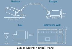 nestbox_lesser-kestrel_plan_web