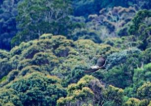 phils-eagle