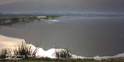 Pego-Marshes-in-winter-at-dawn