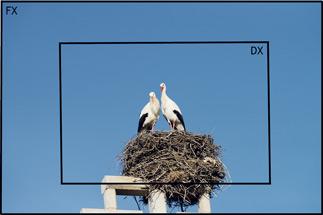 fx-stork-copy