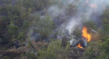 Wildlife-crime-incendio-forestal